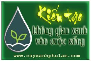 Cây xanh Phú Lâm