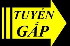 Công ty TNHH Toyo Ink Compounds Viêt Nam tuyển gấp nhân viên IT (IT junior staff)
